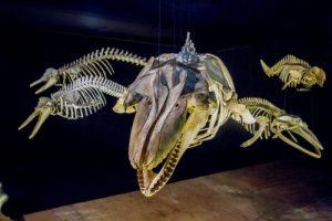 museu-oceanografico-univali-balneario-picarras-sc-rafael-cassio